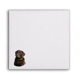 Chocolate Labrador dog photo portrait Envelopes