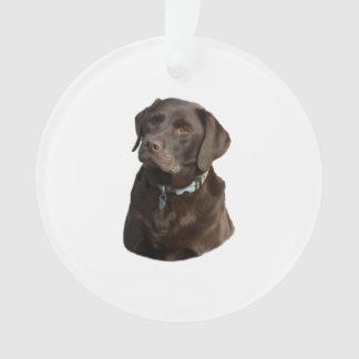 Chocolate Labrador dog photo portrait Ornament