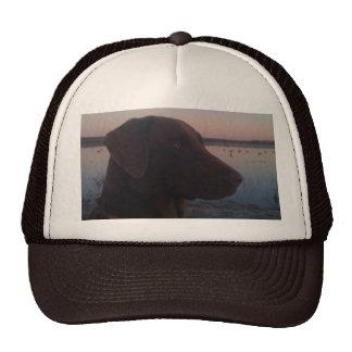 chocolate labrador hats