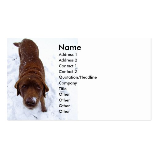 Chocolate Labrador in Snow Business Card