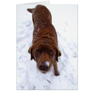 Chocolate Labrador in Snow Card