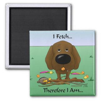 Chocolate Labrador laboratorios - traigo… el imá