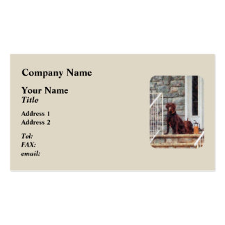Chocolate Labrador on Porch Business Card Template