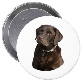 Chocolate Labrador photo portrait Buttons