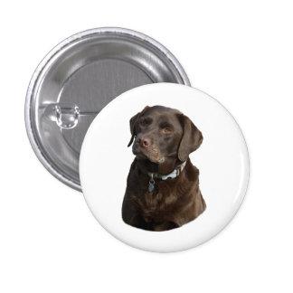 Chocolate Labrador photo portrait Pin