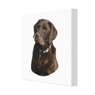 Chocolate Labrador photo portrait Canvas Print