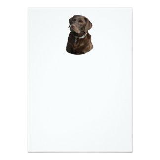 Chocolate Labrador photo portrait Card
