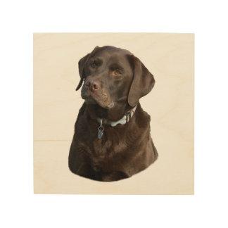 Chocolate Labrador photo portrait Wood Wall Decor