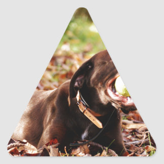 Chocolate Labrador Playing With Ball Triangle Stickers