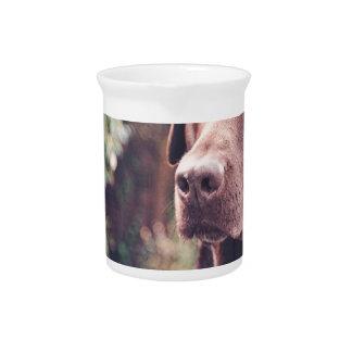 Chocolate Labrador Portrait Drink Pitchers