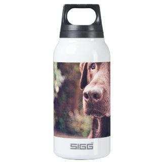 Chocolate Labrador Portrait Insulated Water Bottle