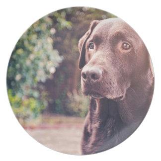 Chocolate Labrador Portrait Plates