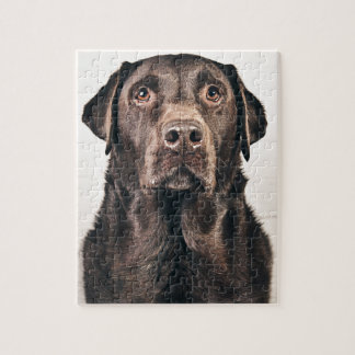 Chocolate Labrador Portrait Puzzles