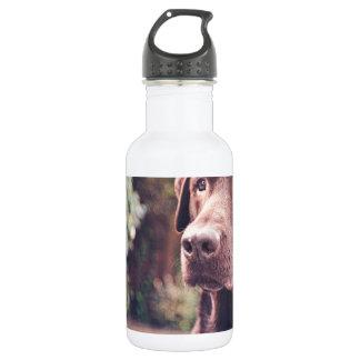 Chocolate Labrador Portrait Stainless Steel Water Bottle