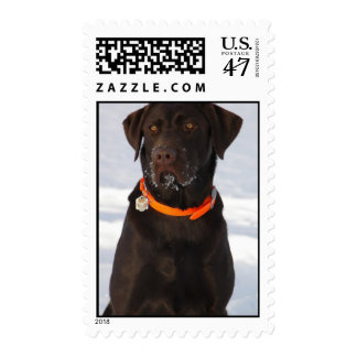 Chocolate Labrador Postage Stamp