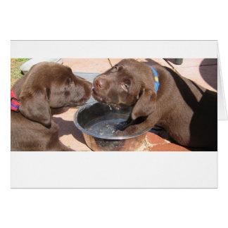 Chocolate Labrador Puppies Card