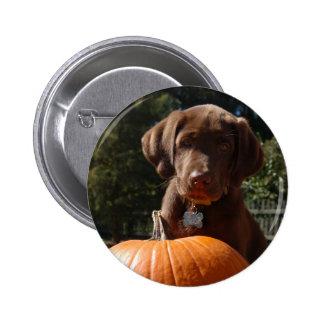 Chocolate Labrador Puppy Button