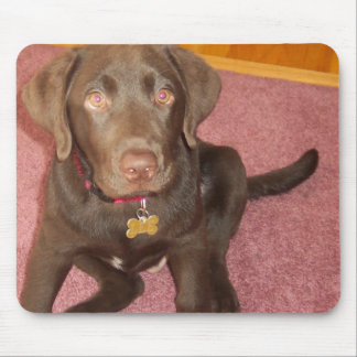 Chocolate Labrador Puppy  Mouse Pad