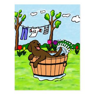Chocolate Labrador Puppy Pool Postcard