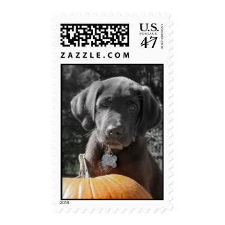 Chocolate Labrador Puppy Postage