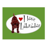 Chocolate Labrador Puppy Postcard