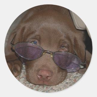 Chocolate Labrador Puppy Sticker