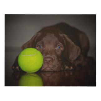Chocolate Labrador Puppy With Tennis Ball Panel Wall Art