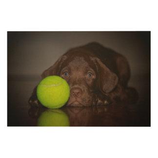 Chocolate Labrador Puppy With Tennis Ball Wood Print