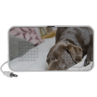 Chocolate Labrador que duerme en cama Mini Altavoces