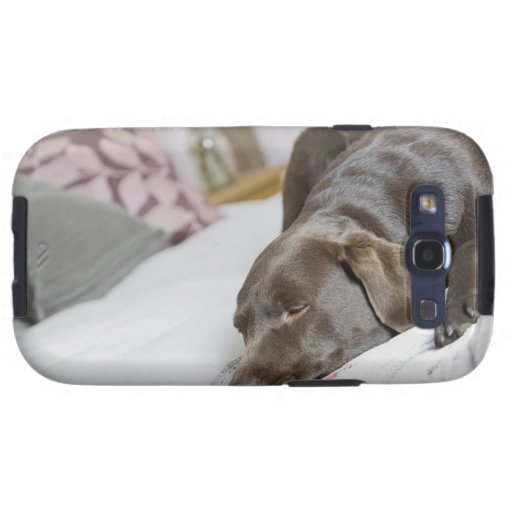 Chocolate Labrador que duerme en cama Samsung Galaxy S3 Funda