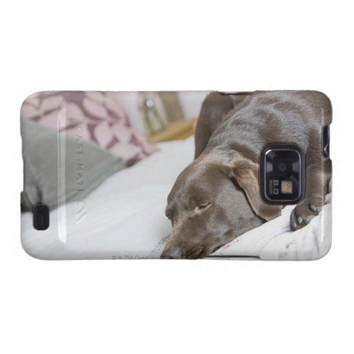 Chocolate Labrador que duerme en cama Galaxy SII Fundas