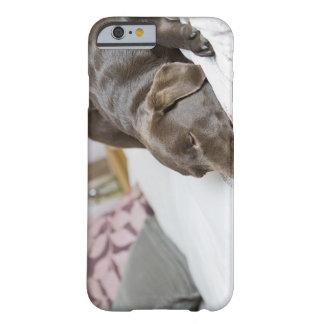 Chocolate Labrador que duerme en cama Funda Para iPhone 6 Barely There