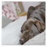 Chocolate Labrador que duerme en cama Tejas
