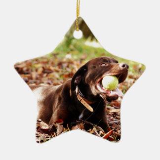 Chocolate Labrador que juega con la bola Adorno Navideño De Cerámica En Forma De Estrella