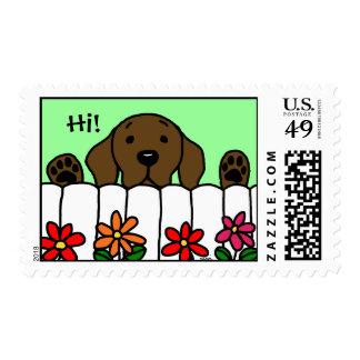 Chocolate Labrador que le mira Sello