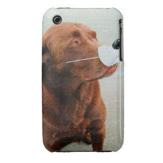 Chocolate Labrador que lleva una nariz falsa Case-Mate iPhone 3 Cobertura