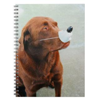 Chocolate Labrador que lleva una nariz falsa Libreta