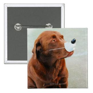 Chocolate Labrador que lleva una nariz falsa Pin Cuadrado