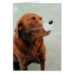 Chocolate Labrador que lleva una nariz falsa Tarjetón