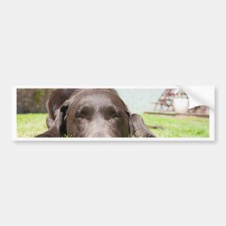 Chocolate Labrador Relaxing in the Garden on a Bri Bumper Sticker