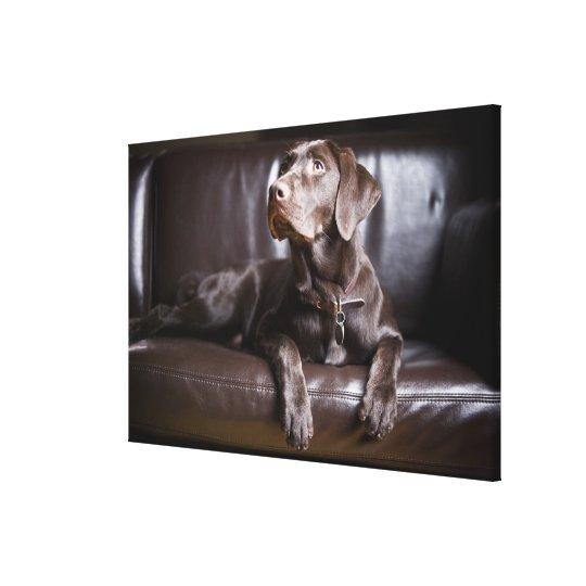 Chocolate Labrador Retriever Canvas Print