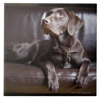 Chocolate Labrador Retriever Ceramic Tile