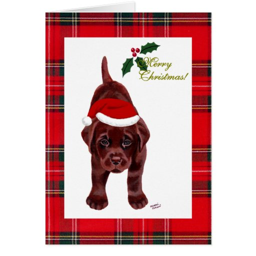 Chocolate Labrador Retriever Christmas Card
