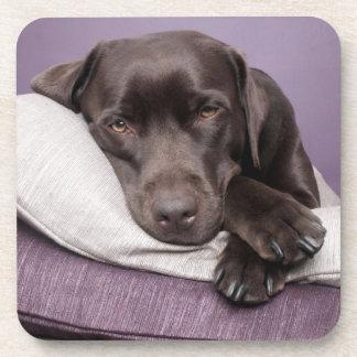 Chocolate labrador retriever dog sleepy on pillows beverage coaster