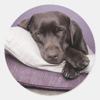 Chocolate labrador retriever dog sleepy on pillows classic round sticker
