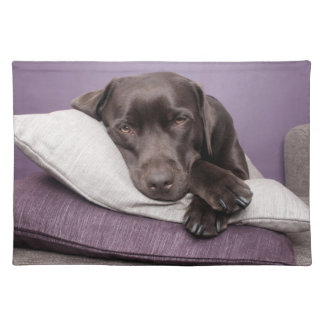 Chocolate labrador retriever dog sleepy on pillows cloth placemat