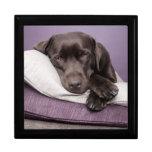 Chocolate labrador retriever dog sleepy on pillows gift boxes