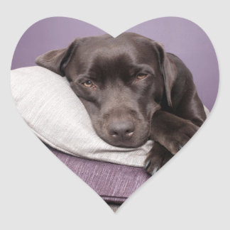 Chocolate labrador retriever dog sleepy on pillows heart sticker