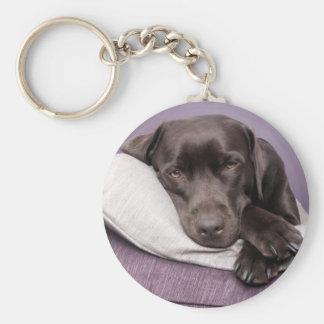 Chocolate labrador retriever dog sleepy on pillows keychain