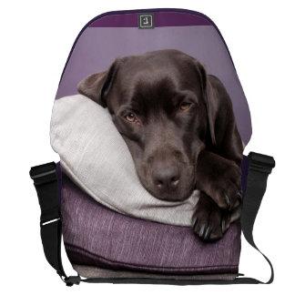Chocolate labrador retriever dog sleepy on pillows messenger bag